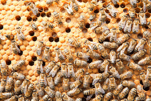 Viele bees auf honeycombs – Foto