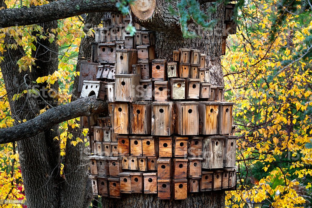 Many Birdhouses on a huge tree in the forest stock photo