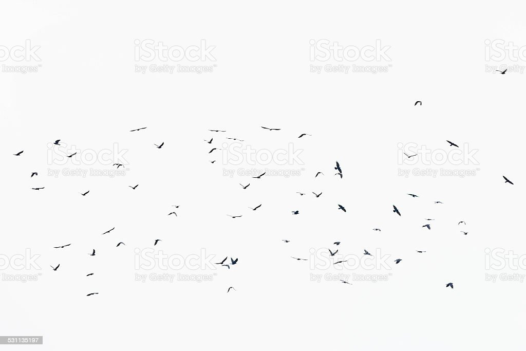 Many Birds Flocking Together stock photo