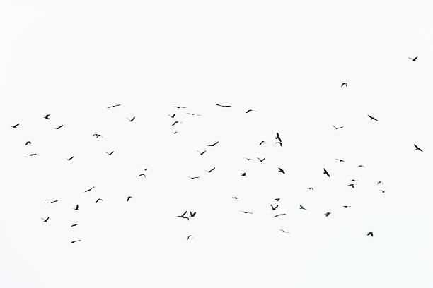 Many Birds Flocking Together stock photo