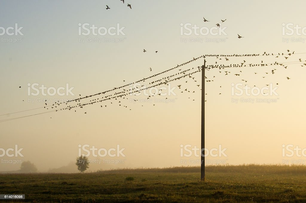 many birds flying and sitting on the background of nature stock photo