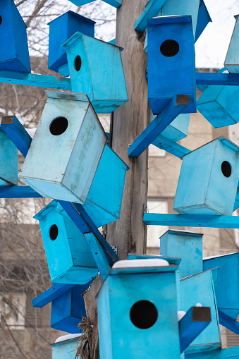 Many bright colored birdhouses on a tree at city. Closeup photo of birdhouses. Bird hotel.