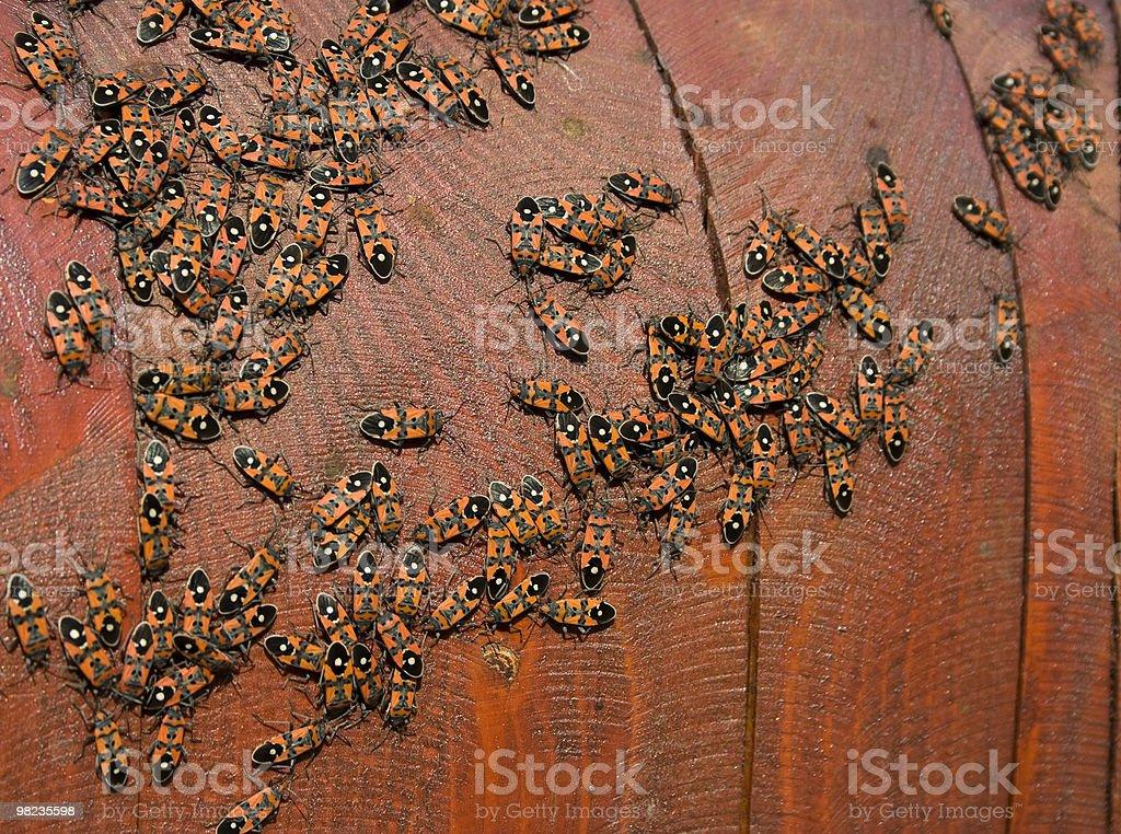 many bug royalty-free stock photo