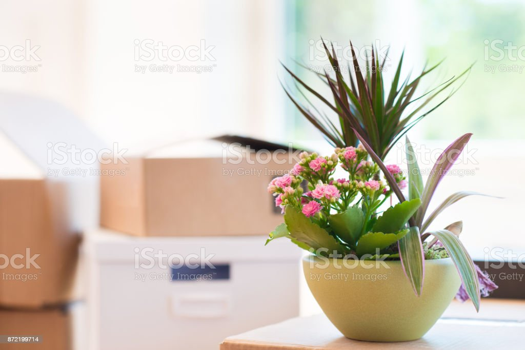 Many cardboard boxes in bright house during relocation stock photo