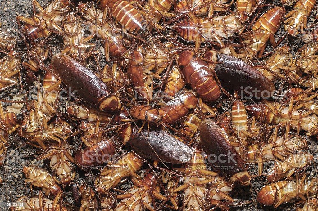 Molti cockroaches - foto stock