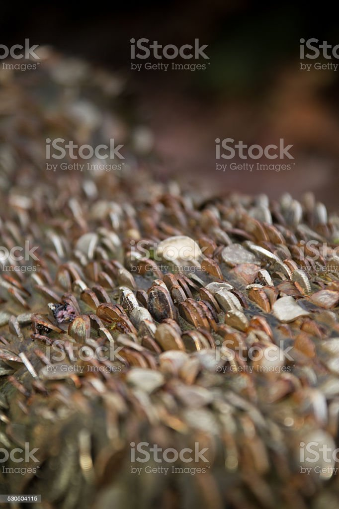 Many Coins in Wood stock photo