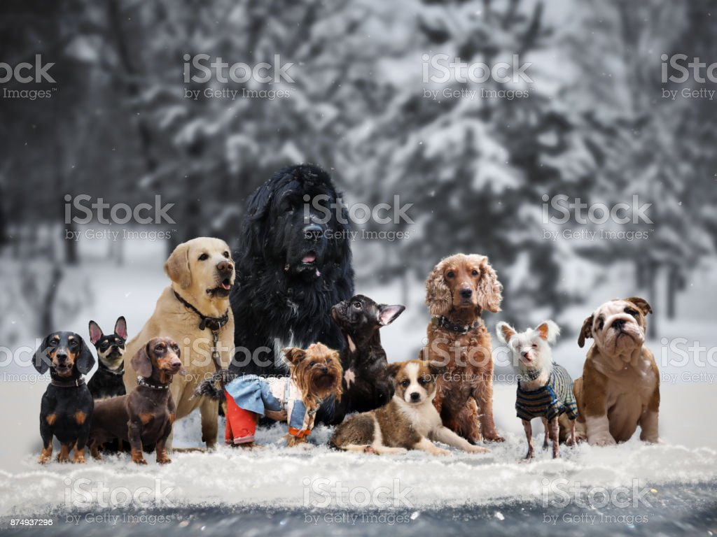 Many different breeds of dogs under the snow стоковое фото
