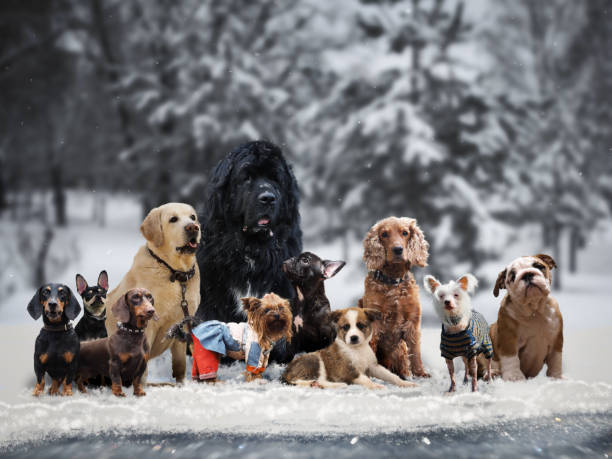 Many different breeds of dogs under the snow stock photo