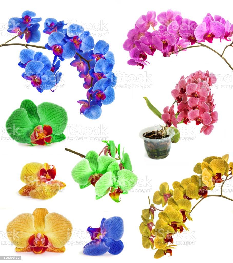 muchas orquídeas diferentes aislar en una sola página. - foto de stock