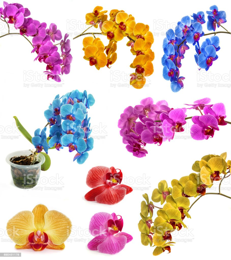 many different orchids isolate in one page. stock photo