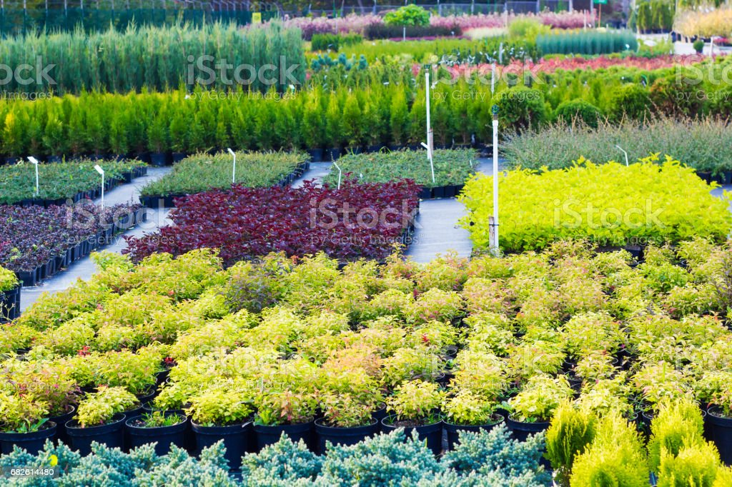 Many different plants and trees in pots offered for sale at garden center stock photo