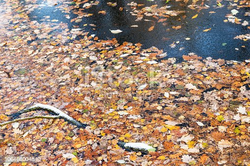 many fallen leaves on frozen water surface of forest river in cold autumn day