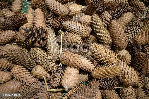 many fir cones are spread out on the ground for decoration