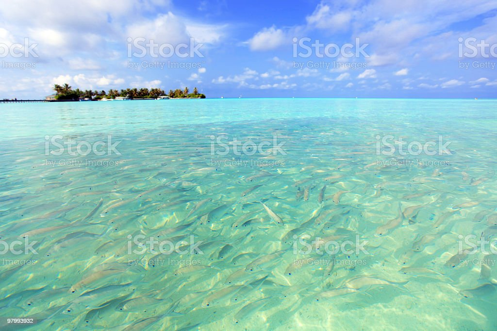 Many fishes in tropical sea. royalty-free stock photo