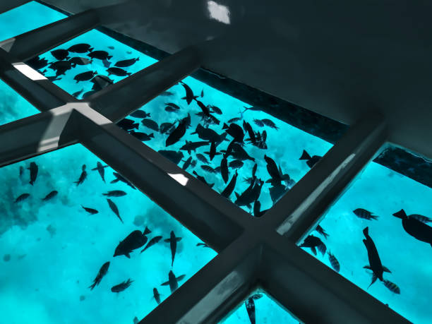Many fishes silhouettes against the background of turquoise water under a boat with a transparent bottom stock photo