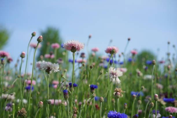 Many flowers at Ushiku stock photo