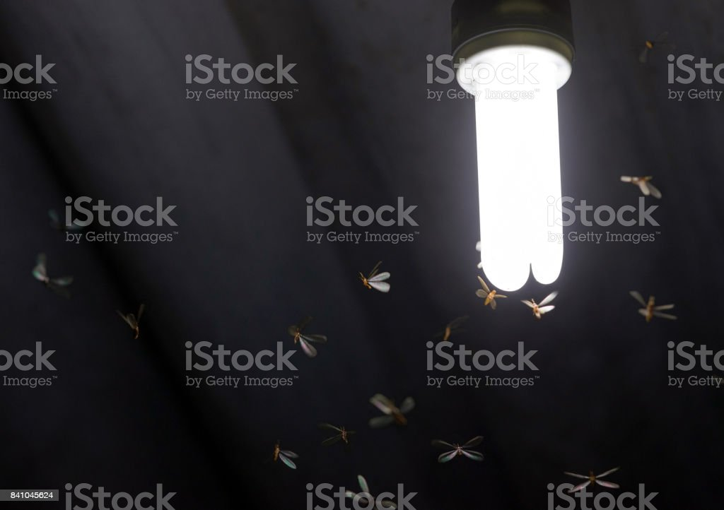 Many flying termites / moths close surrounding to a lit white light bulb on a home's roof stock photo