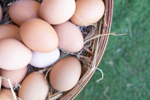 Many fresh eggs are ready for cooking. stock photo