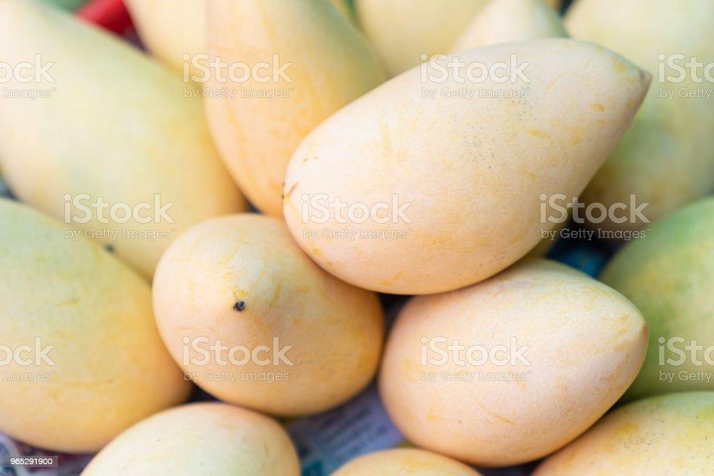 Many fresh yellow mango. zbiór zdjęć royalty-free