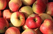 Many freshly harvested red apples