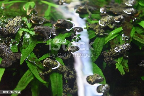 Frogs resting on water leafs