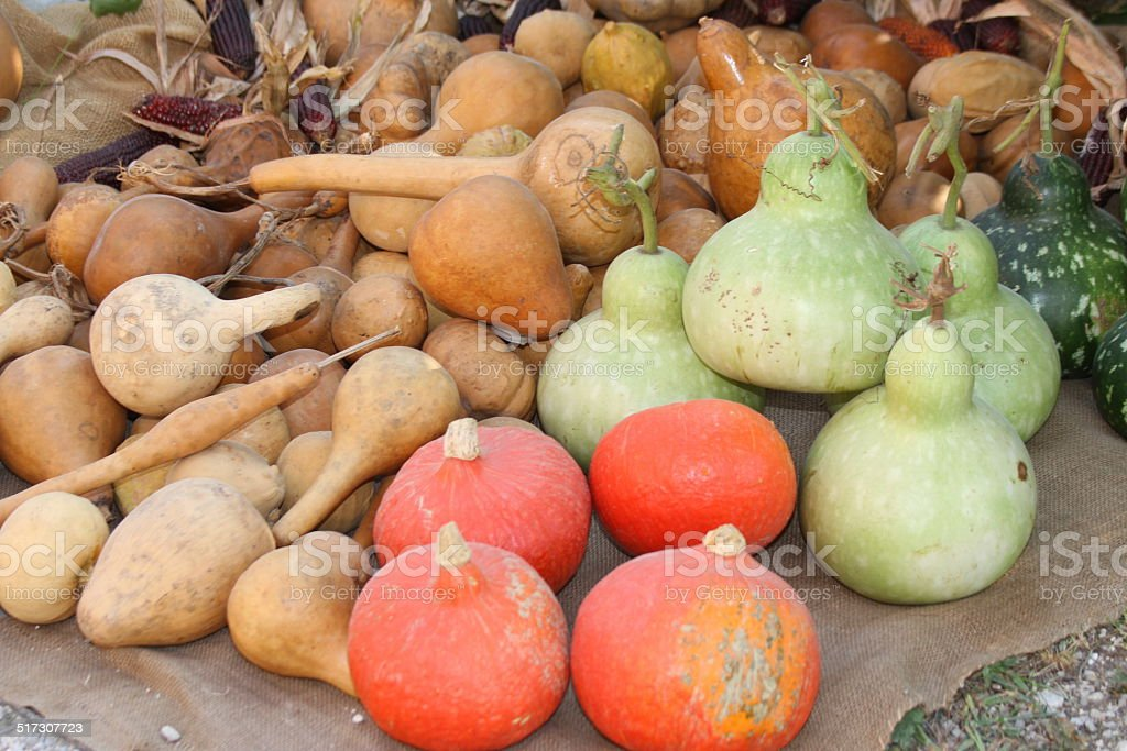 many green and orange pumpkins  on sale at the market stock photo