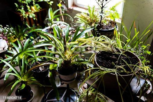 Many green garden indoor plants in winter by window backyard view in house basement in winter