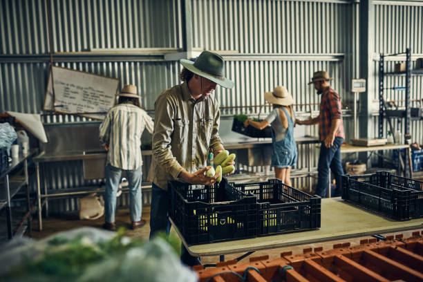 Many hands makes light work Shot of a group of farmers packing freshly harvested herbs in their warehouse agricultural cooperative stock pictures, royalty-free photos & images