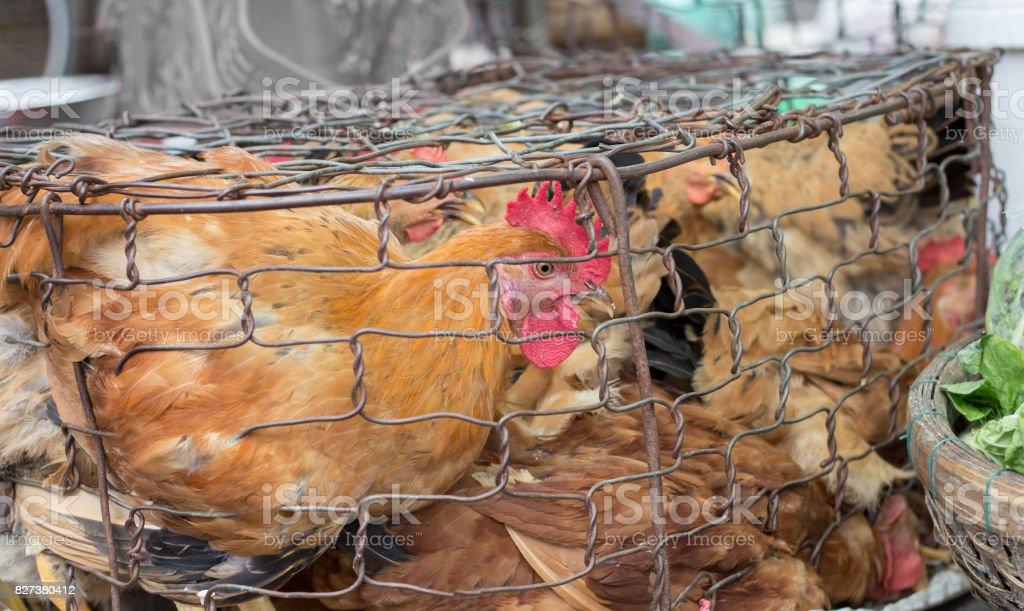 kalabalık kafeste birçok tavuklar stok fotoğrafı