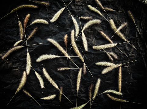Many herb spikelets and seeds on black background