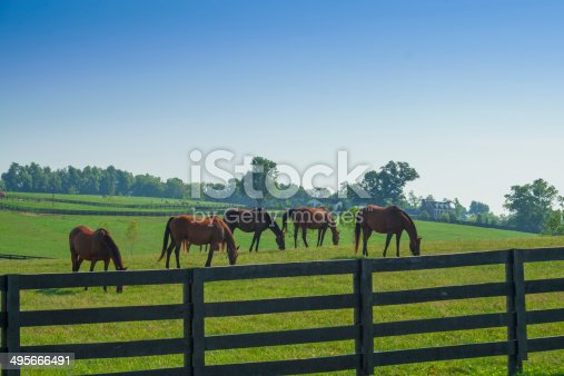 Photo of tree hourses feeding in a green pasture