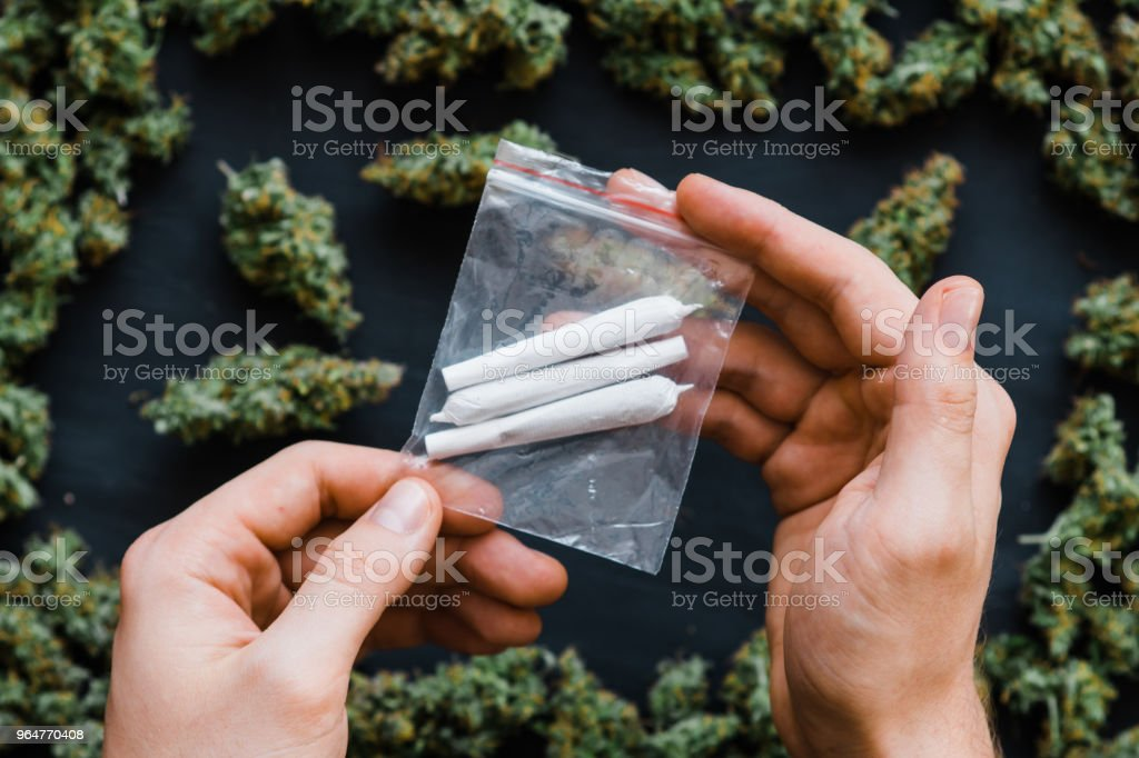 many Joint Package cannabis in hand Joint in hand A lot of marijuana Package with weed and fresh buds of cannabis many weed. Copy spase Copy-space joint fresh green buds of royalty-free stock photo
