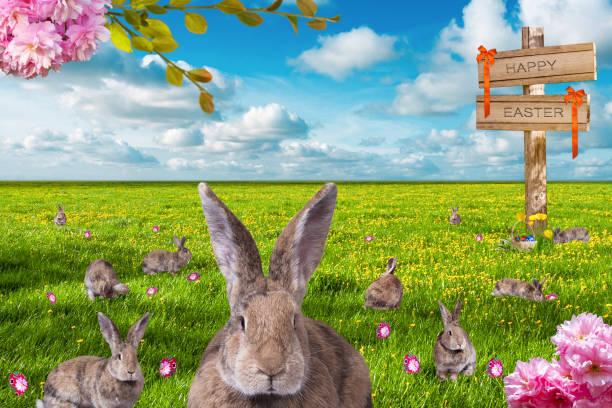 Many little brown rabbits in a green meadow are looking for easter picture id1131410275?b=1&k=6&m=1131410275&s=612x612&w=0&h=y8dvygh4dcdegzsyahnlcstghbxd1q5d6b1lbygsm9q=