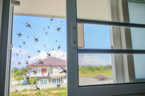 viele mücken fliegen ins haus, während insektennetz geöffnet wurde - fliegengittertüre stock-fotos und bilder