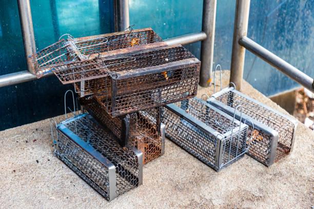 many mouse trap cage put together both old and new prepare to use. - trappola per topi foto e immagini stock