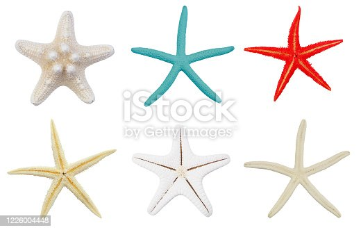 Many natural starfish isolated on white background, sea stars collection.