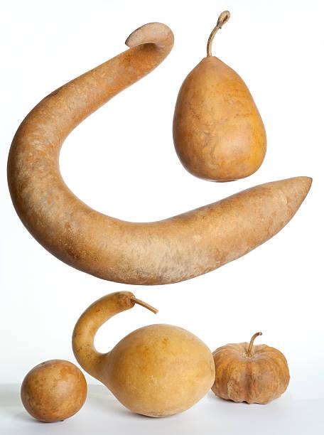 Many Odd Shaped Gourds stock photo