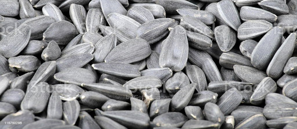 many of sunflower seeds stock photo