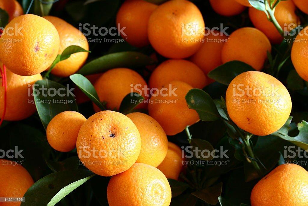 many oranges stock photo