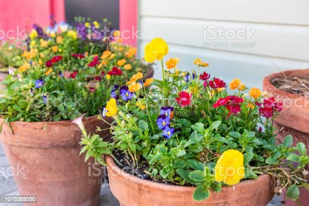 Veel Pansy Gele Oranje En Blauwe Bloemen In Grote Bloem Potten Bloempotten Decoratie Op Straat In De Stad Klei Opslaglocaties Stockfoto en meer beelden van Aangelegd