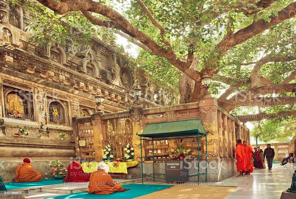 Many prayers sitting around the Bodhi tree stock photo