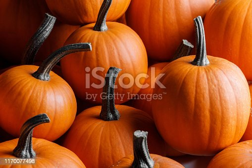 Many orange pumpkins background , Halloween holiday concept
