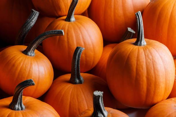 Many pumpkins background stock photo