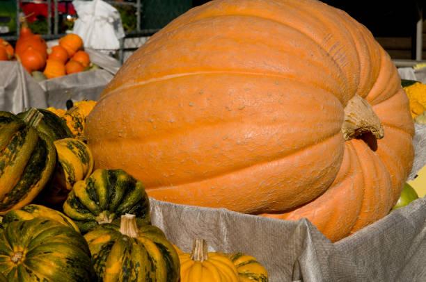 Viele Kürbisse auf einem Markt im Herbst – Foto