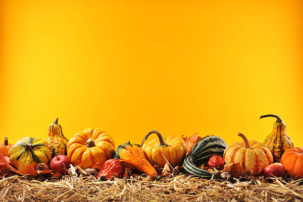 many pumpkins Thanksgiving – many different pumpkins on straw in front of orange background with copyspace anhydrous stock pictures, royalty-free photos & images