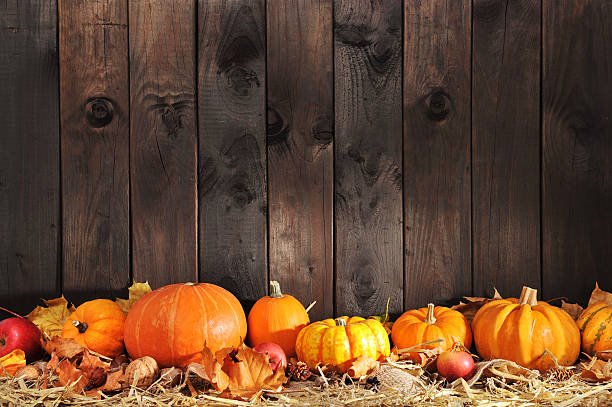 many pumpkins Thanksgiving – many different pumpkins on straw in front of old weathered wooden boards with copyspace anhydrous stock pictures, royalty-free photos & images