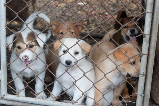 many puppies in a cage - allevatore foto e immagini stock