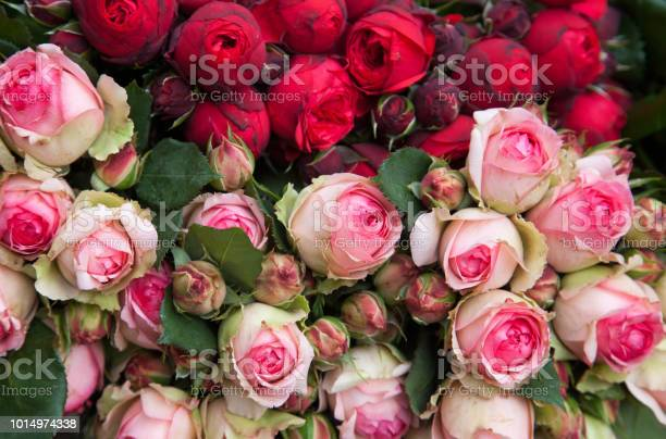 Many red and pink roses decoration picture id1014974338?b=1&k=6&m=1014974338&s=612x612&h=r aar65erb xrc0t5pbx7 2vmx3y59mx1wp3plzbisk=