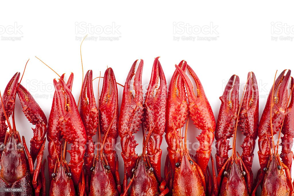Many red crayfish isolated on white royalty-free stock photo
