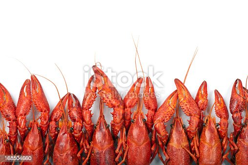 Many red crayfish on white background
